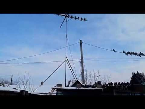 Николаевские голуби .г.Мариуполь.