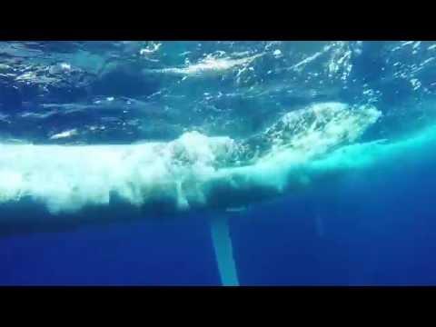 TP52 World Championship 2016 - Underwater