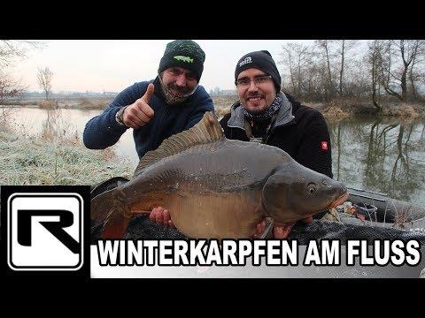 Karpfenangeln am Fluss | Winterkarpfen | Schneemann-Montage fängt Fisch bei Randeis