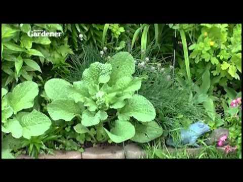 Manitoba Gardener episode 2