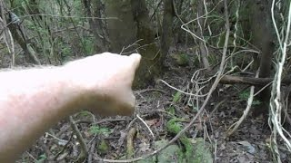 Metal Detecting An Old Cellar Hole In The Woods For Relics.