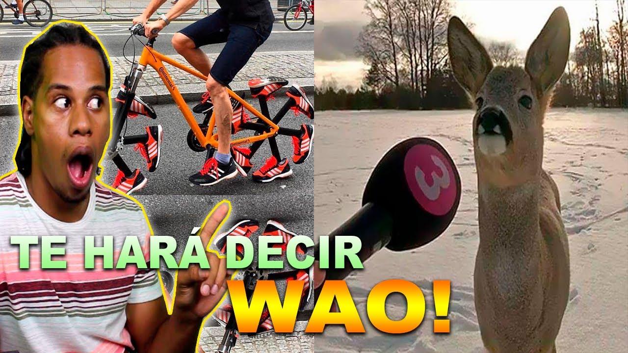 Este Vídeo Te Hará Decir WAO!!! WOW