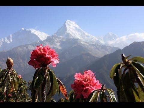 Narayan Gopal (स्वर सम्राट नारायण गोपाल) - Ma Ta Lali-Guras Bhayechhu म त लालीगुराँस भएछु