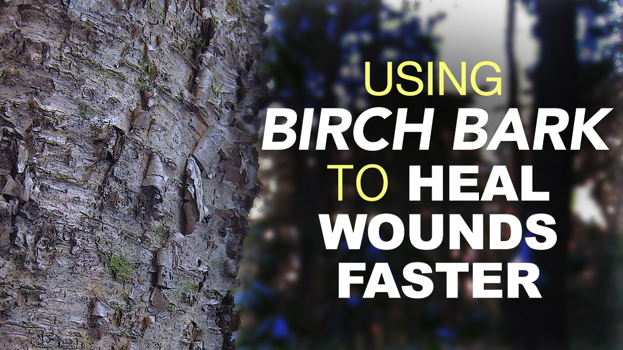 Using Birch Bark To Heal Wounds Faster