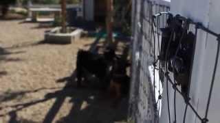 Aggressive Dog Training Los Angeles
