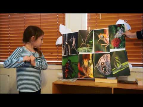 MCDC Kindergarteners First Research Project-Animals