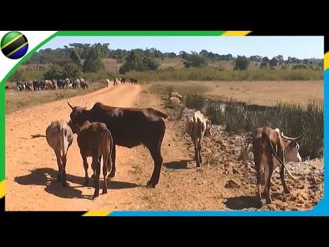 Meteorites → Vwawa Road in Mbeya - Tanzania