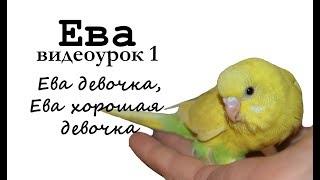 """Учим попугая по имени Ева говорить. Видеоурок 1: """"Ева девочка, Ева хорошая девочка"""""""
