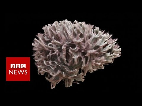 The most detailed scan of the wiring of the human brain - BBC News