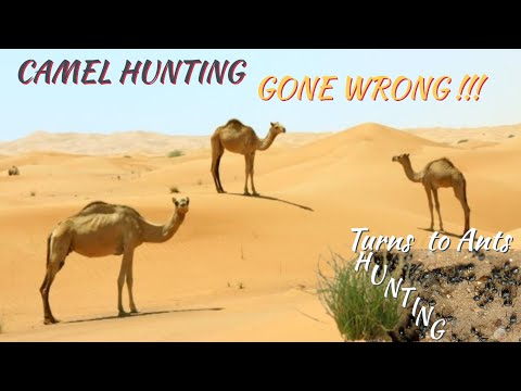 CAMEL HUNTING GONE WRONG | TURNS TO ANTS HUNTING | SAGITTARIUS ANGEL CHANNEL