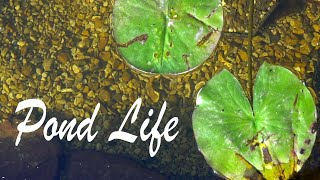 Why You Should build a Pond - Pond Life