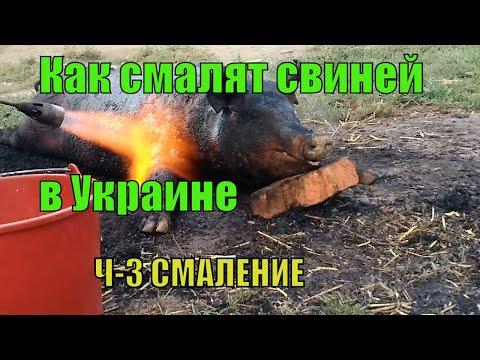 Как забить свинью,Как заколоть свинью,Как обсмалить свинью,Как разделать свинью,ЧАСТЬ-3 СМАЛЕНИЕ