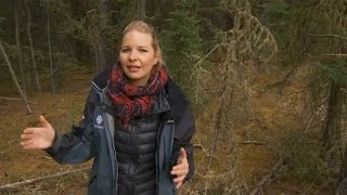 Johanna Wagstaffe describes the conditions that made the Fort McMurray fire conditions so explosive