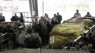 marché aux bestiaux de Laissac