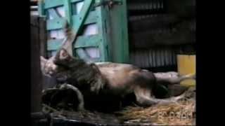 """""""Земляне""""- Запрещенный фильм к показу во многих странах (шокирующий фильм о животных)"""
