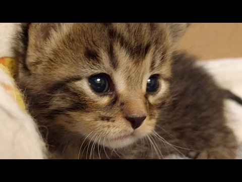 Close Up Kittens 2017-05-05