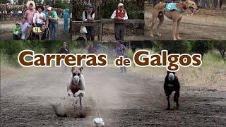 """""""Carrera de Galgos"""" Capítulo 6 Serie web Tradiciones."""