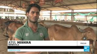 Inde : le Maharashtra interdit l'abattage du bœuf