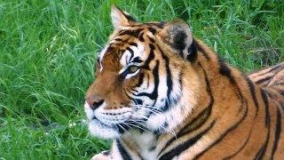 CABARCENAS- Der grösste Zoo Europas