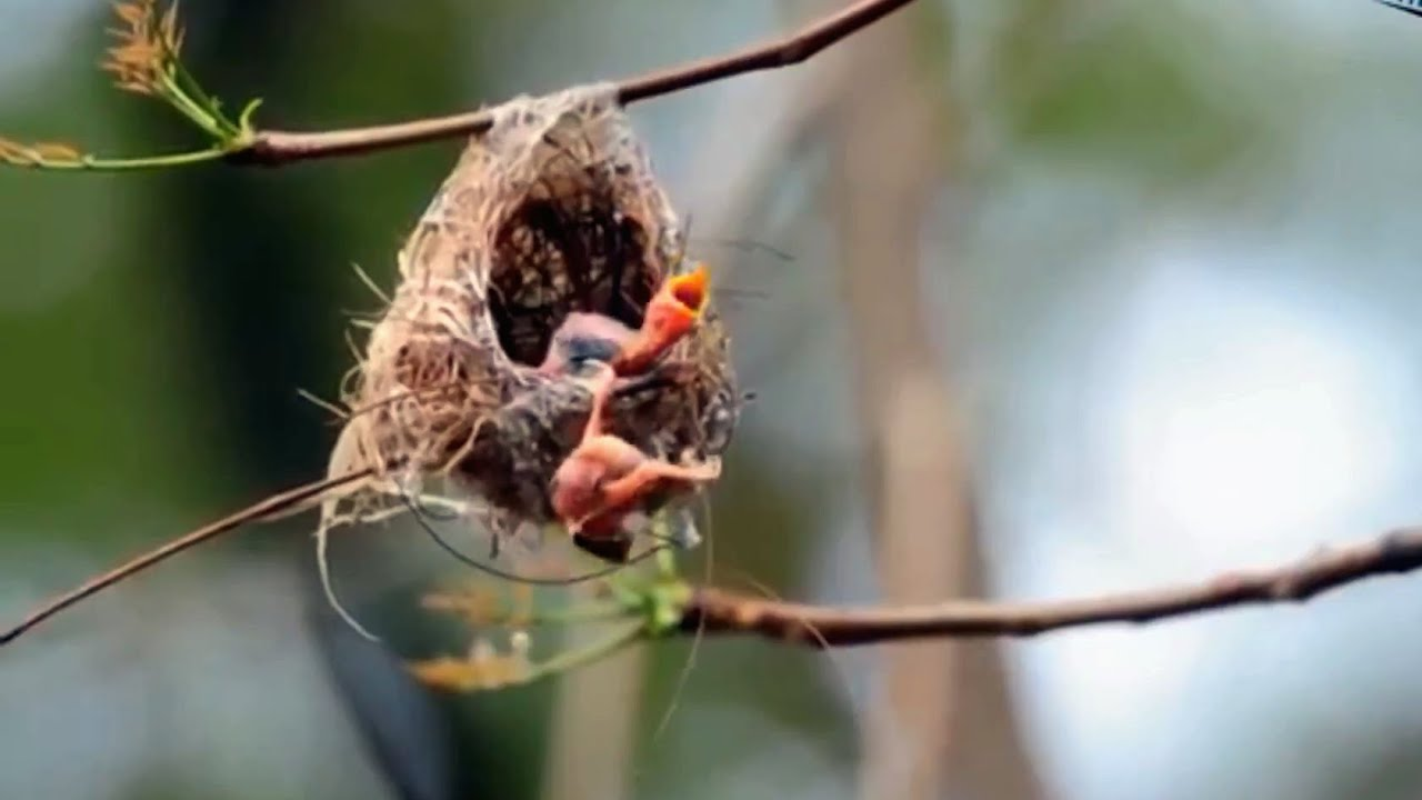 Mother Saves Baby bird which is about to Fall   Silver eye ...