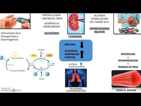 fisiopatología simple de la diabetes