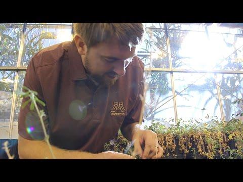My Plant Path: Graduate Student Andrew Sathoff