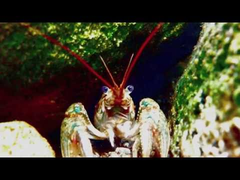 Colorful Crayfish Song