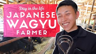 Day in the Lİfe of a Japanese Wagyu Beef Farmer