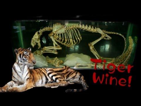 Tigers in China Massacred to Make Bone Wine | China Uncensored