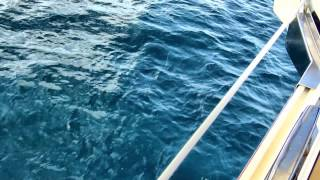 Cartagena och delfiner
