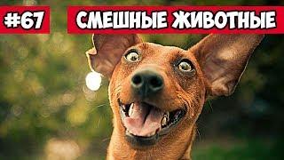 Смешные животные - собачий разговор | Bazuzu Video ТОП подборка ноябрь 2017
