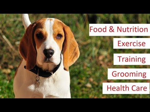Beagle 101 - Feeding, Training, Exercise, Grooming & Health Care of a Beagle