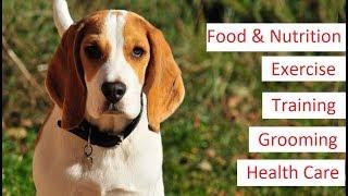 Beagle 101  Feeding, Training, Exercise, Grooming & Health Care of a Beagle