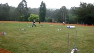 Nadac Agility Elite Jumpers Q Border Terrier 14/11/08.mpg