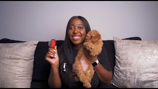 Toy Poodle Nighttime Routine | Belle