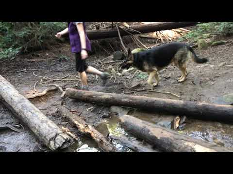 Conclusion CA Hiking with German Shepherd Series Part 4.5 of 4.5 Hiking with Dog