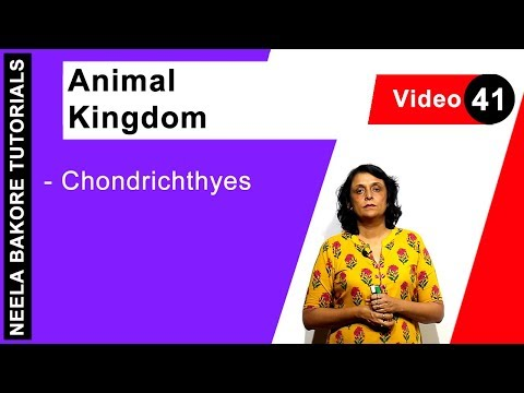 Biology For NEET & AIIMS |  Animal Kingdom - Chondrichthyes