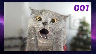 ПОДБОРКА СМЕШНЫХ ВИДЕО С КОТАМИ 001 Смешные кошки Funny Cats