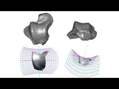 CARTA:Bipedalism and Human Origins--Matthew Tocheri:Insights into Bipedalism from Gorilla Anatomy
