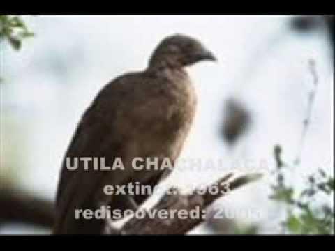 Lazarus Taxon: Rediscovered Extinct Animals!