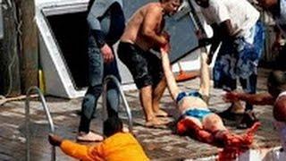 When animals attack humans - marine animals attack humans