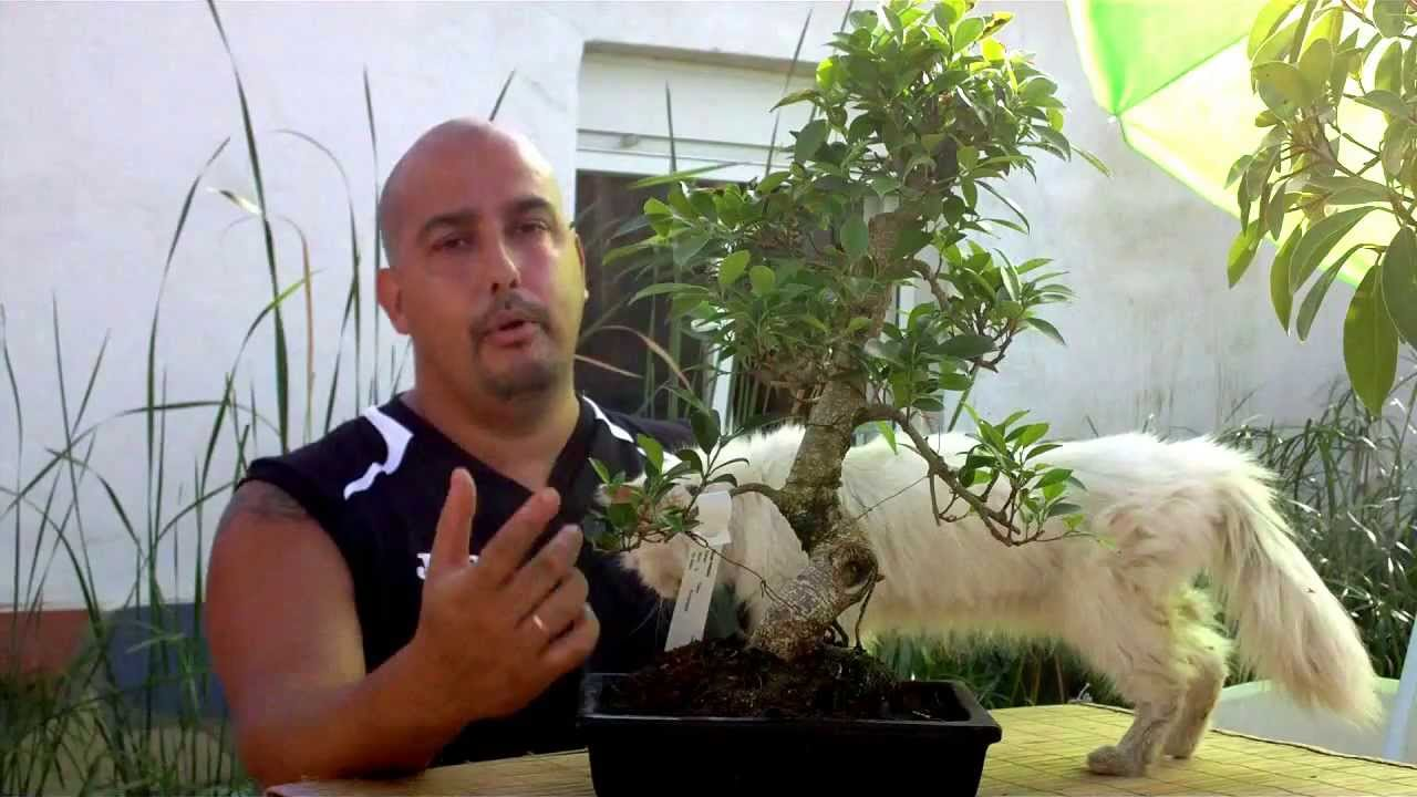Escuela De Bonsai Online Directrices Youtube