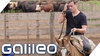 Argentinisches Rindfleisch: Darum sind die Discounter-Produkte so billig | Galileo | ProSieben