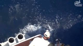 CatchStat   2012 Bisbee's Black & Blue Marlin Tournament Fish #14485