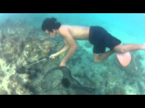 Sea urchin hunt philippines