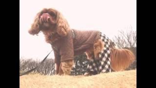 2011.3.13 わが家にやってきたバーディー。 かわいくて癒される愛しい我...