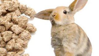 Комбикорм своими руками для кроликов. Составляющие и рецепт.