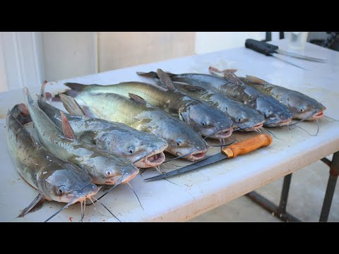 CATFISH On A Trotline - Fried Catfish Feast!!!
