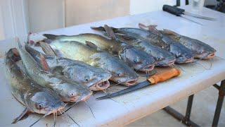catfish-on-a-trotline-fried-catfish-feast