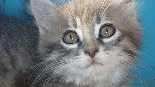 Смотреть онлайн смешные котята